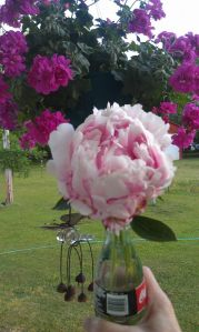 Homegrown Peony in Waterford Vase